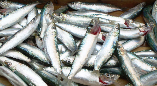 silver fish, catania fish market, sicily, italy