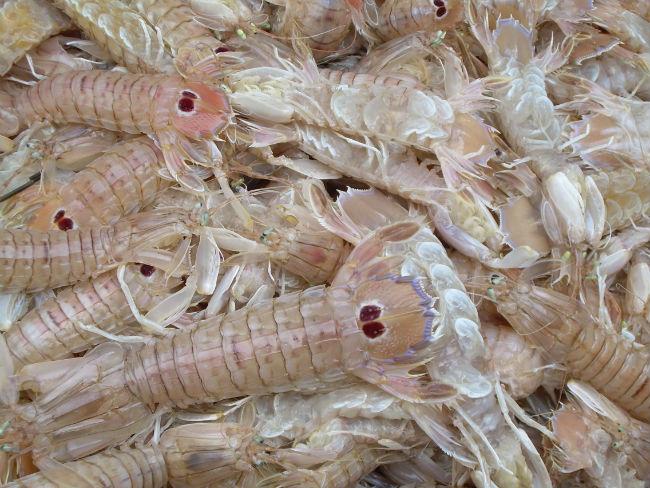 shellfish catania fish market sicily
